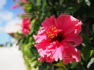 赤花と空との写真・画像素材[2076964]