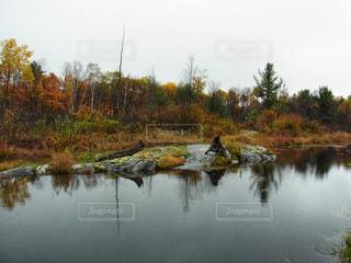 クランベリーが育つ沼と紅葉が残る森林の写真・画像素材[2133448]