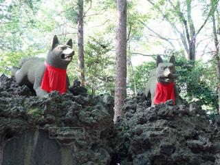 岩の上に座っている狐の写真・画像素材[2104944]