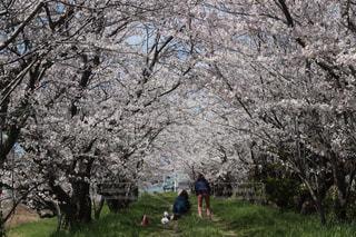 汐見公園の写真・画像素材[2058911]