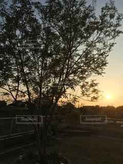 夕日と樹木の写真・画像素材[2064693]