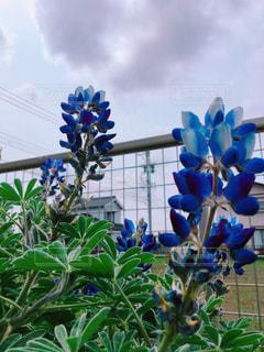 植物の写真・画像素材[2088830]
