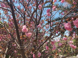 花の写真・画像素材[2061181]