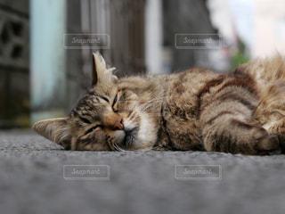 猫の写真・画像素材[2417468]