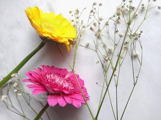 植物の上のピンクの花の写真・画像素材[2892654]