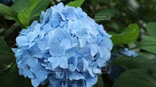 花の写真・画像素材[2050946]