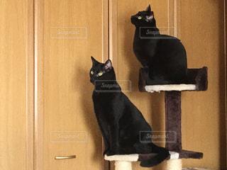 木製のドアの前のキャットタワーと黒猫の写真・画像素材[2099363]