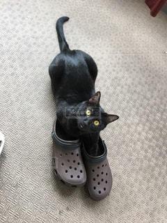 ベランダの靴で遊ぶ黒猫の写真・画像素材[2099399]