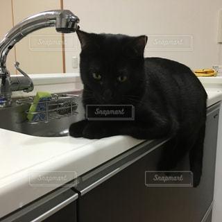 流しの隣に座る黒猫の写真・画像素材[2099427]