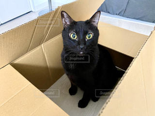 箱の中に座っている黒い猫の写真・画像素材[2888371]