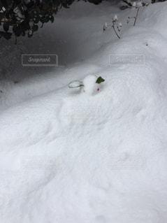 雪うさぎの写真・画像素材[2052792]