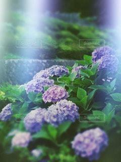 花の写真・画像素材[80586]