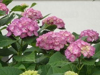 花の写真・画像素材[83341]