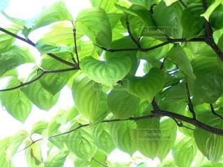 植物 - No.83432