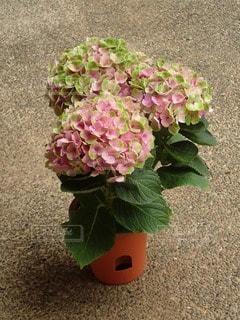 No.83488 植物