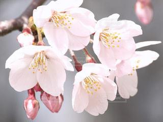 花の写真・画像素材[128754]