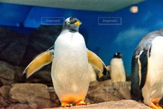 ペンギンの写真・画像素材[2284628]