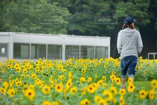 黄色い花を見た人の写真・画像素材[2292089]