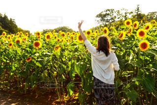 黄色い花の前に立っている男の写真・画像素材[2318359]