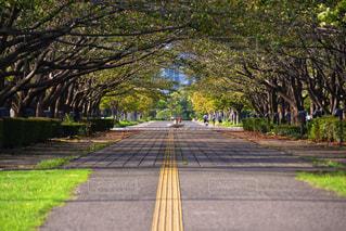 道の写真・画像素材[2472296]