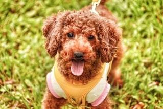 愛犬の写真・画像素材[2599260]