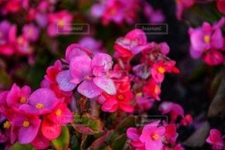 花をクローズアップするの写真・画像素材[2726415]