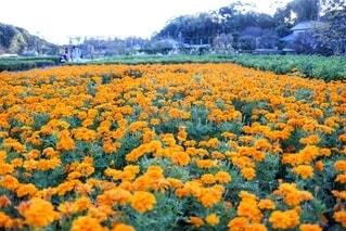 花をクローズアップするの写真・画像素材[2726418]