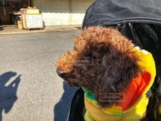 愛犬の写真・画像素材[2737088]