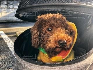 愛犬の写真・画像素材[2737091]
