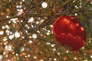 クリスマスイルミネーションの写真・画像素材[2810408]