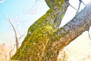 苔の写真・画像素材[3004637]