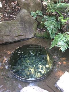 明治神宮内に加藤清正が掘ったと言われる湧水。パワースポットと言われ沢山の方が訪れる。の写真・画像素材[2056970]