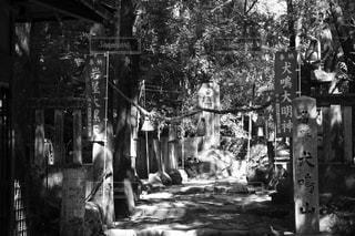 犬鳴山の写真・画像素材[2063842]
