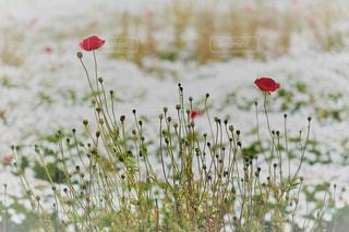 花の写真・画像素材[2152753]