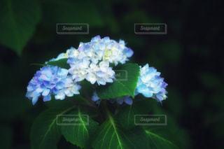 花のクローズアップの写真・画像素材[2175985]