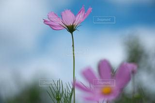 花のクローズアップの写真・画像素材[2189734]