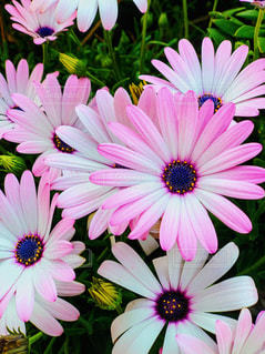 花の写真・画像素材[2067962]