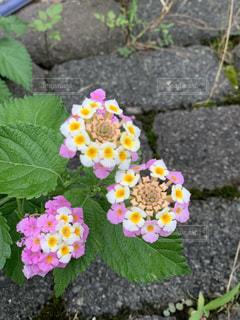よくあるお花の写真・画像素材[2281624]