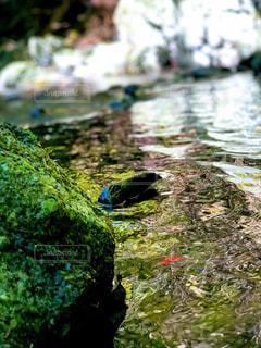 水域の隣の岩の上に座っている鳥の写真・画像素材[2281661]