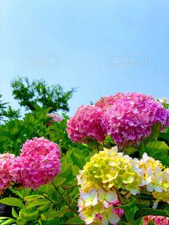 花のクローズアップの写真・画像素材[2281682]