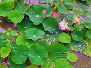 池のクローズアップの写真・画像素材[2345198]