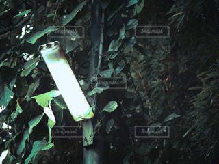 緑の写真・画像素材[2486066]