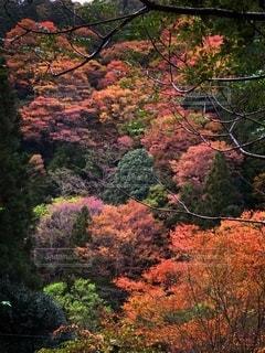 森の中の木の写真・画像素材[2713511]
