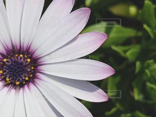 花のクローズアップの写真・画像素材[3011944]