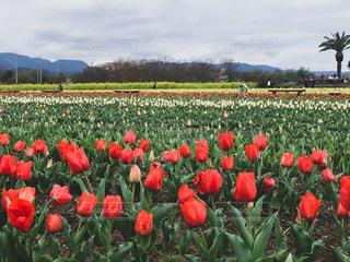 カラフルな花のグループの写真・画像素材[3095900]