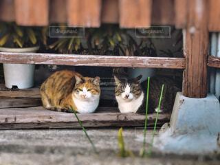 仲良し猫さんの写真・画像素材[4238870]