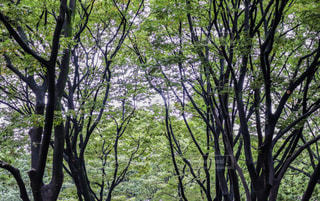 自然の写真・画像素材[2581822]