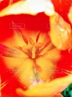 近くの花のアップの写真・画像素材[2079454]