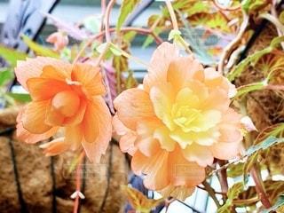 近くの花のアップの写真・画像素材[2080156]