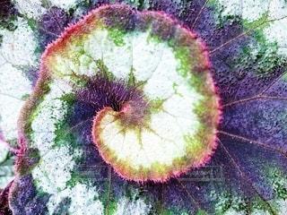 近くの花のアップの写真・画像素材[2080161]